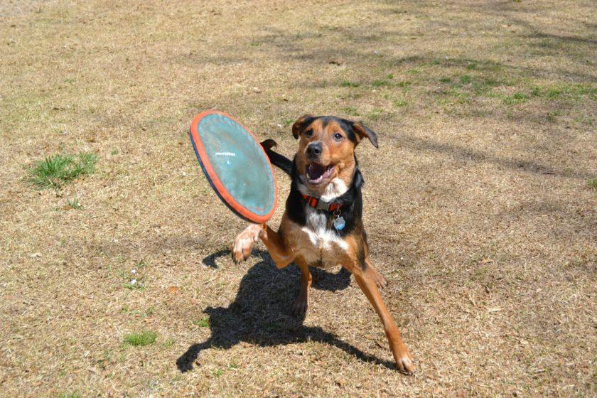 dog-catch